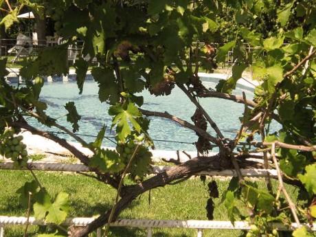jardin-piscina-fondamatia-039